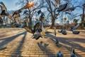 Картинка птицы, город, парк, голуби
