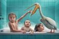 Картинка дети, птица, рыба, ванна