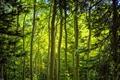 Картинка стволы, лес, ветки, природа