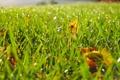 Картинка трава, капли, роса, листва, размытость