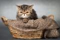 Картинка дом, взгляд, кошка