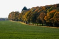 Картинка начало осени, деревья, дорога, лесополоса, поле, небо