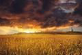 Картинка облака, поле, пшеница, небо