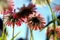 Картинка цветы, фото, обои, растения, лепестки, стебель, Flowers