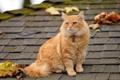 Картинка крыша, кошка, листья