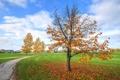 Картинка дорожка, трава, небо, дом, осень, дерево