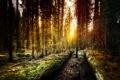 Картинка лес, california, калифорния, Yosemite, Old Forest