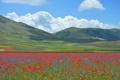 Картинка трава, цветы, горы, маки, луг, Италия
