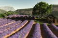 Картинка поле, цветы, дерево, холмы, арт, ряды, лаванда