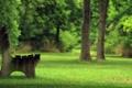 Картинка зелень, лето, парк, скамья