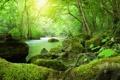 Картинка природа, мох, река, деревья, кани