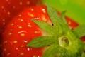 Картинка лето, макро, клубника, ягода