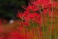 Картинка луг, экзотика, поле, цветы
