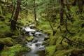Картинка природа, лес, вода, деревья