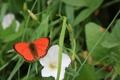Картинка зелень, цветок, лето, макро, природа, отдых, бабочка