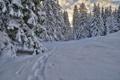 Картинка зима, лес, облака, снег, следы, ёлки