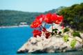 Картинка море, пляж, цветы, красный