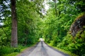 Картинка камни, лето, лес, дорога в лесу, листья, деревья, дорога