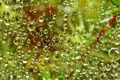 Картинка зелень, вода, капли, Паутина