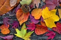 Картинка листья, дерево, colorful, wood, autumn, leaves, осенние