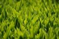 Картинка зелень, трава, листья