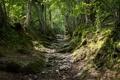 Картинка лес, деревья, камни, склон, русло