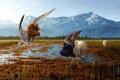 Картинка болото, трава, вода, птицы, танец, природа, арт