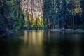 Картинка лес, деревья, мост, природа, озеро, река