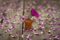 Картинка цветочек, wallpaper, лепестки, розовый, цветок, вазочка, widescreen