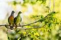 Картинка птицы, природа, дерево