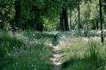 Картинка деревья, природа, весна, одуванчики