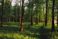 Картинка зелень, лес, пейзаж, утро, тени, березы, солнечный свет