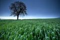 Картинка природа, пейзаж, поле, небо, дерево