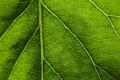 Картинка макро, лист, зеленый, прожилки