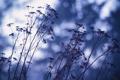 Картинка растение, свет, трава, блик