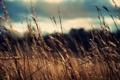 Картинка поле, небо, макро, природа, фото, ветер, обои