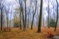 Картинка осень, деревья, парк, скамья