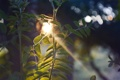 Картинка листья, солнце, растение, солнечные лучи