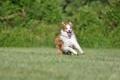 Картинка поле, друг, собака