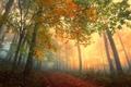 Картинка лес, пейзаж, настроение, Природа