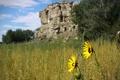 Картинка поле, цветы, горы, природа
