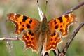Картинка разноцветная, бабочка, насекомое, фон, веточка, размытость