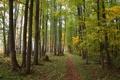 Картинка осень, лес, листья, деревья, тропинка
