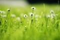 Картинка поле, трава, природа, стебли, лепестки, размытость, маргаритки