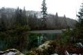 Картинка лес, озеро, берег