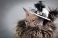 Картинка фон, Сфинкс, кошка