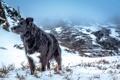 Картинка зима, горы, друг, собака