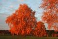 Картинка осень, небо, деревья, природа, фото