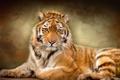 Картинка тигр, текстура, дикая кошка