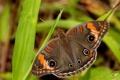 Картинка животные, природа, бабочка, красота